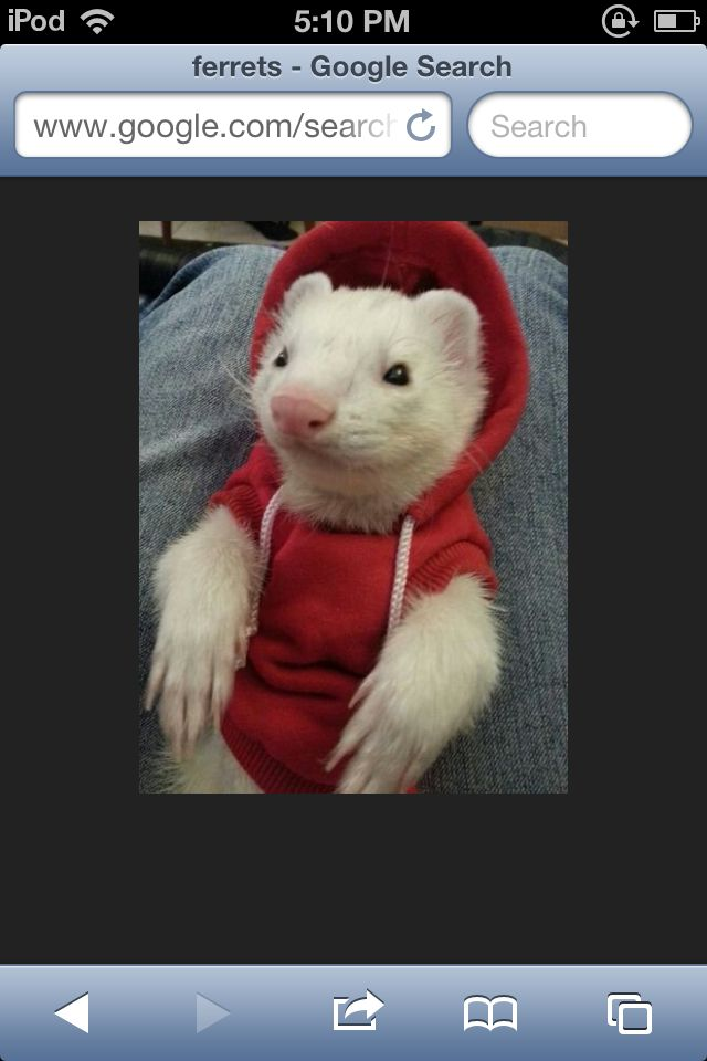 i love ferrets i want one as a pet !!
