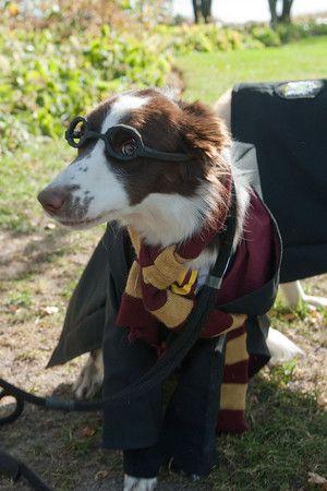 Adorable dog Halloween costumes at Chicago Botanic Garden's