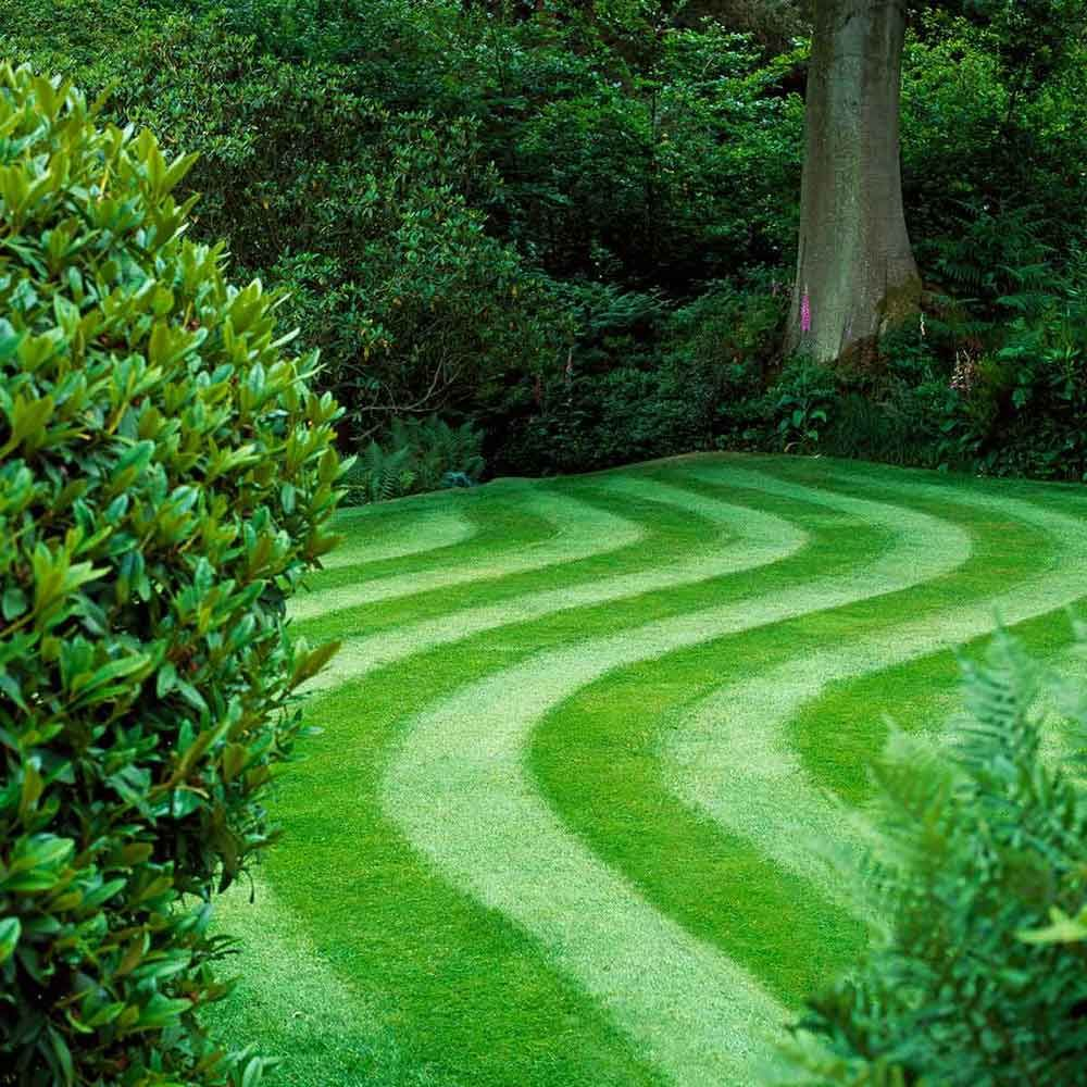 How to grow greener grass yard pinterest grasses lawn and gardens