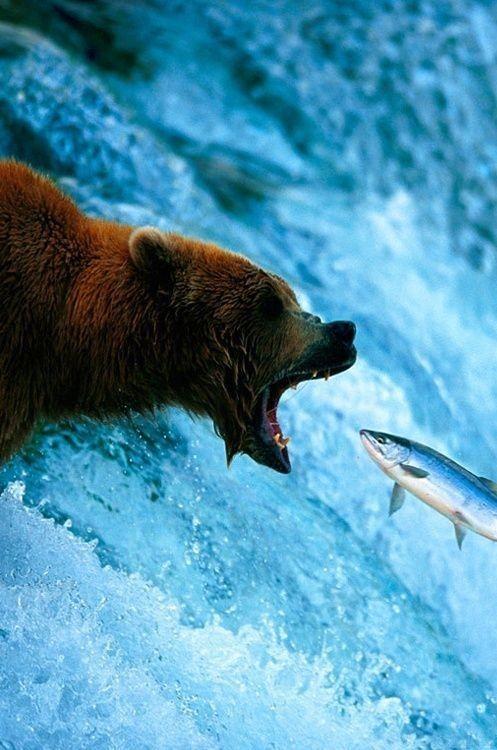 pin von barbara rathmanner auf bären und wasser