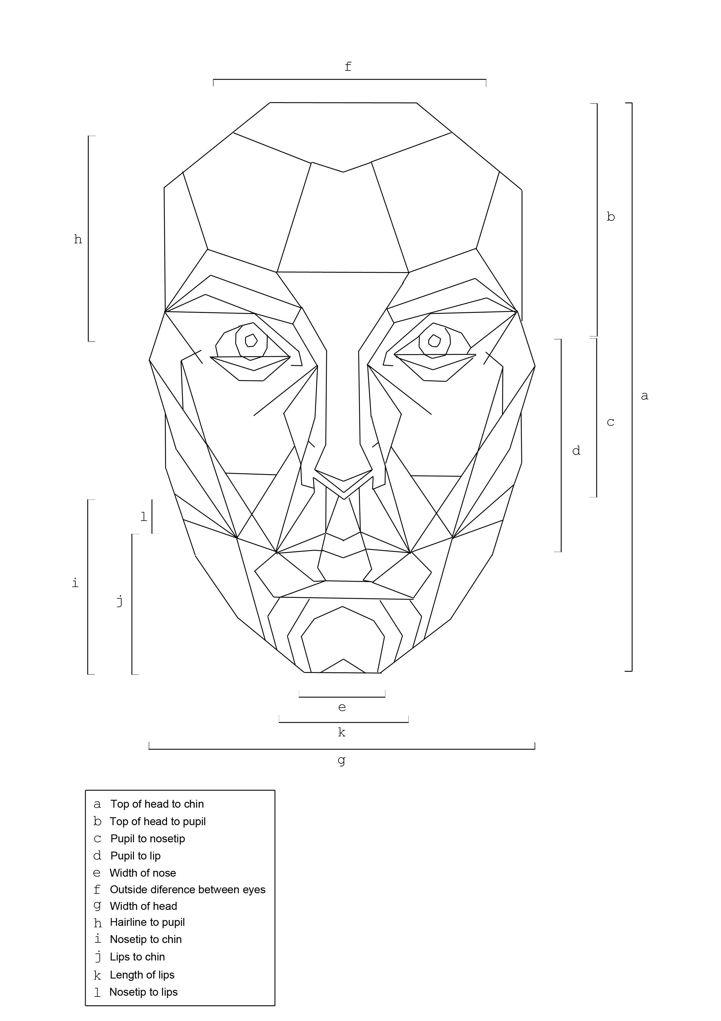 Golden Ratio Head Measurements And Textg 24803508 Anatomy