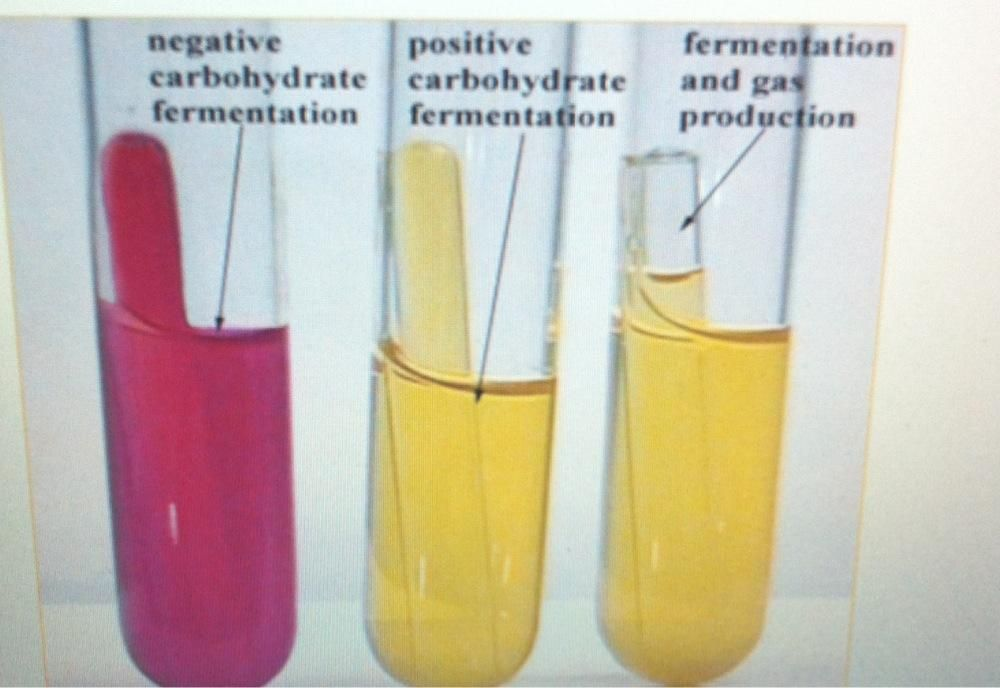 Phenol Red Carbohydrate Fermentation Bacteriology Microbiology