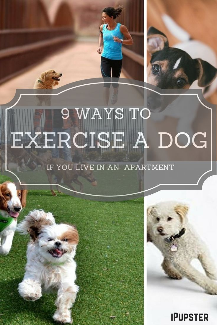 9 Ingenious Ways To Exercise Your Dog If You Live In An Apartment