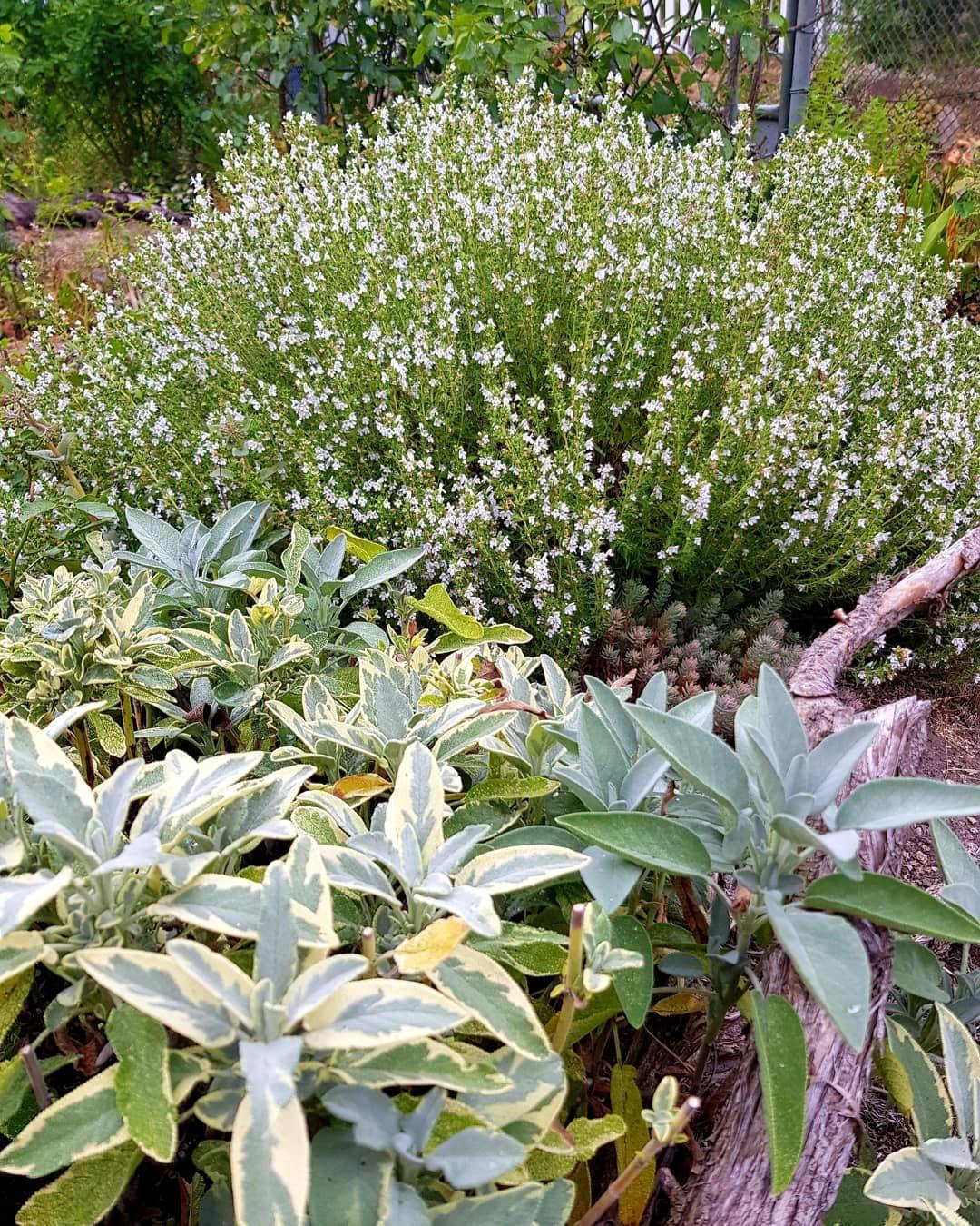 25 Idees Inspirantes De Clotures En Bois Modernes Pour Embellir Votre Cour Arriere Garten Deko Garten Gartenarbeit