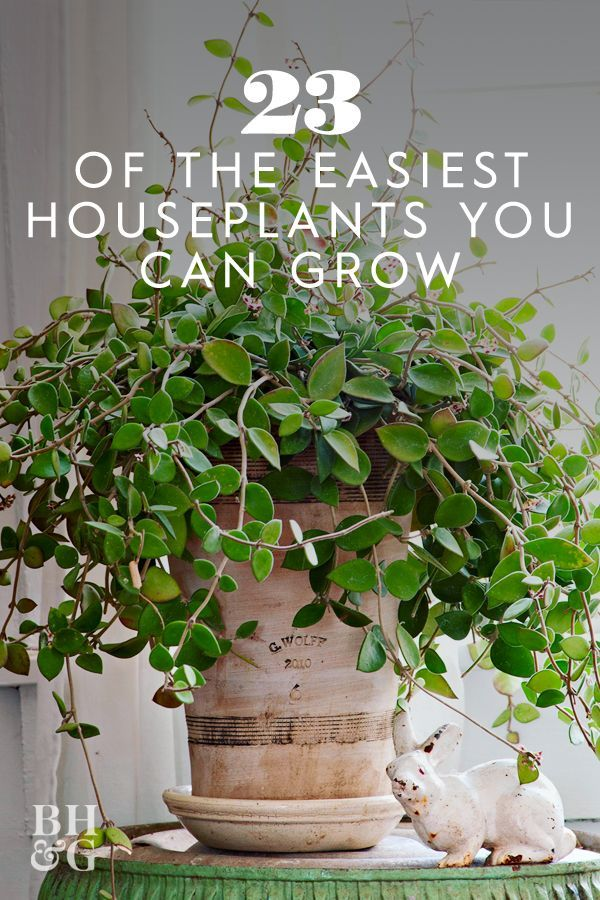 23 of the Easiest Houseplants You Can Grow