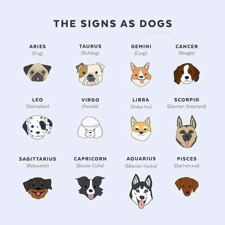 Border Collie Smartest German Shepherd Dog Smartest It