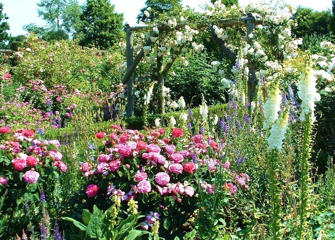 English rose gardens english rose garden seend - Mottisfont Abbey Garden English Country Gardensenglish Rosesroses