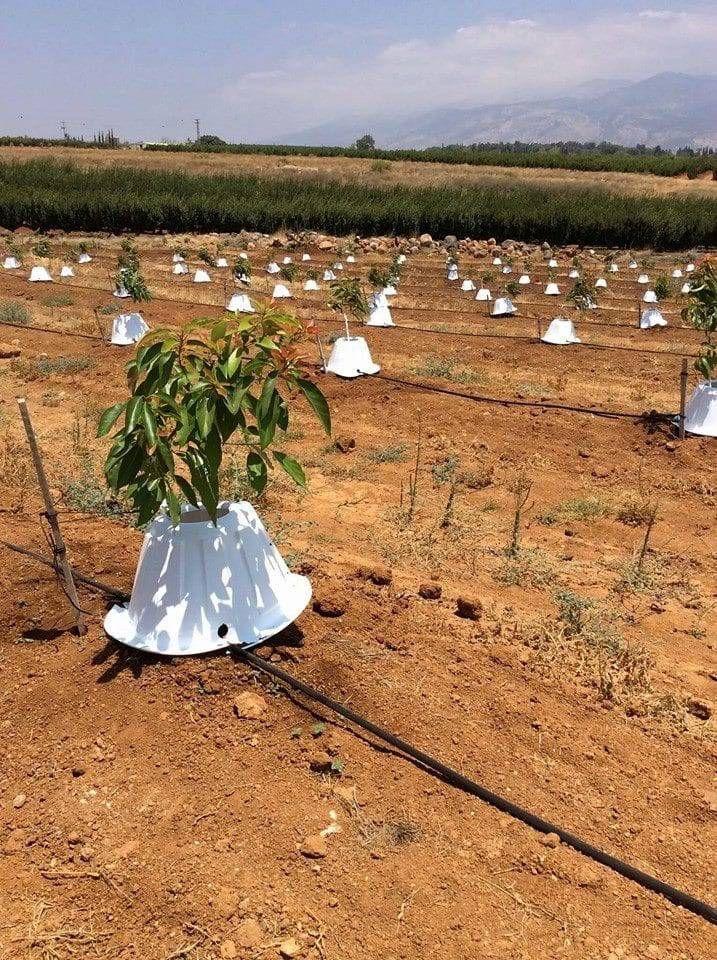 Tree T-PEE. Un protector que reduce en un 90% la necesidad de agua y fertilizantes de los árboles.#ahorrar