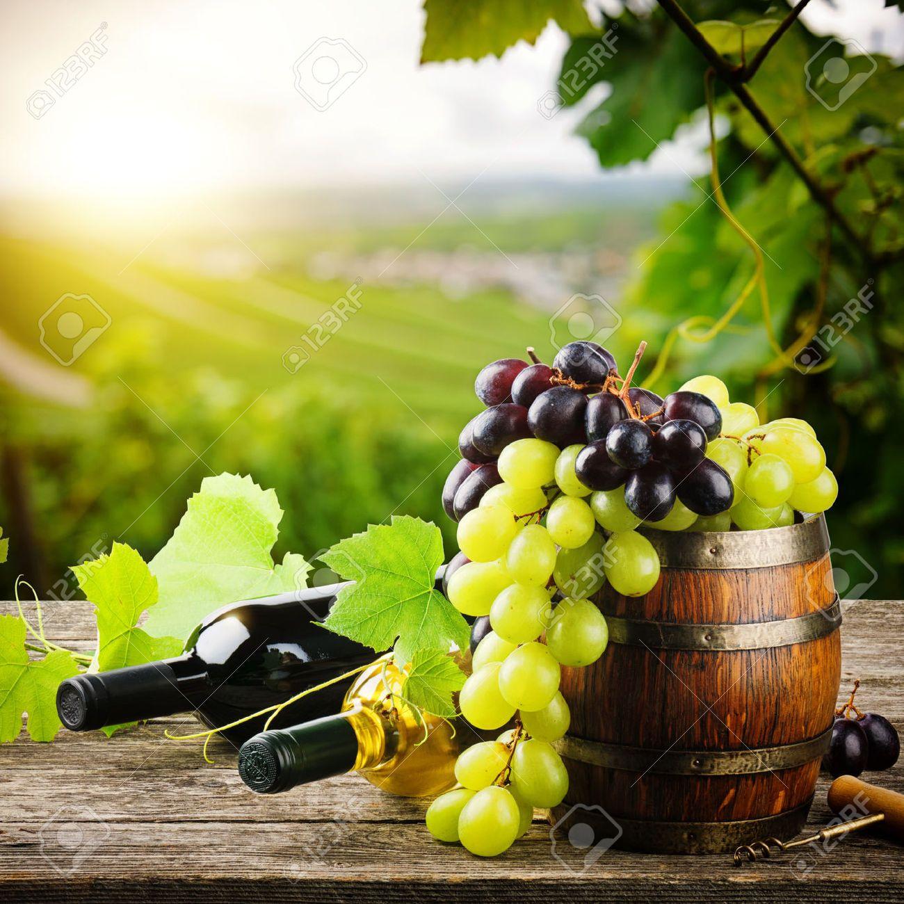 Wein Und Weintrauben Google Search Wine Und