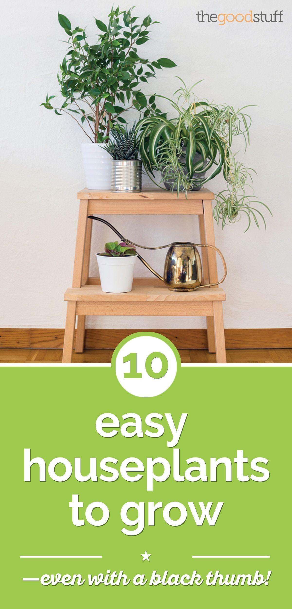 10 Easy Houseplants Anyone Can Grow House plants indoor