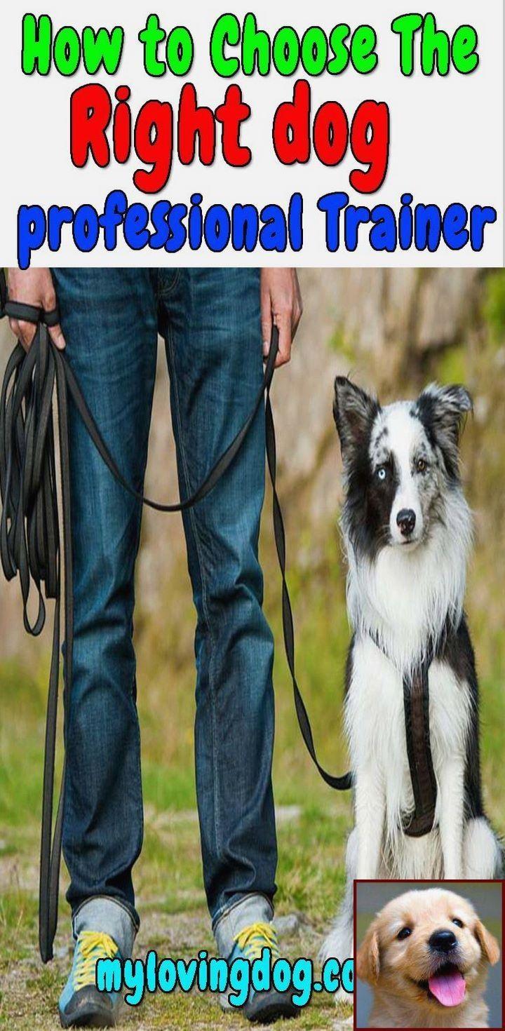 Dog Behavior Sitting On You And Dog Training Courses In Kerala