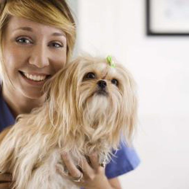 Open House Activities For Veterinary Clinics  Open House
