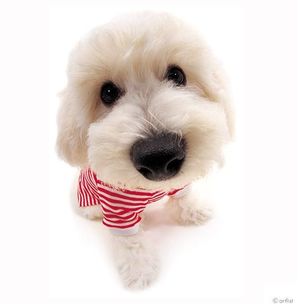 Fun Facts The Dog And Friends Facebook Puppies Havanese Puppies Havanese