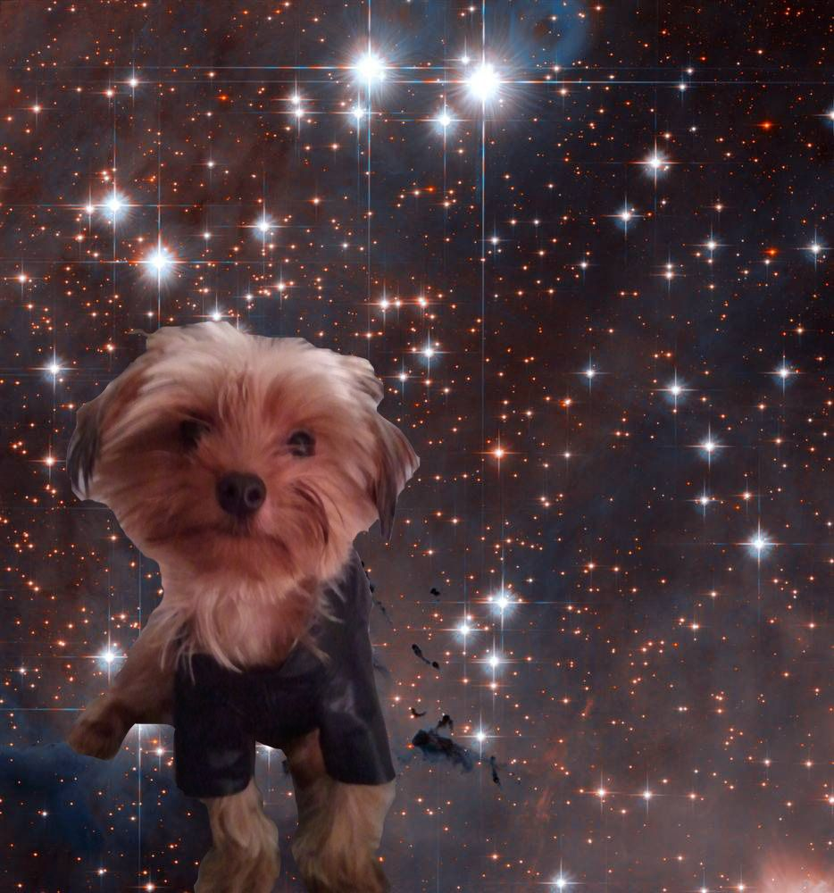 Toddy in space