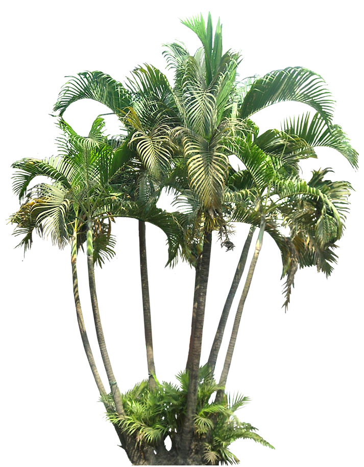 A Collection Of Tropical And Subtropical Plant Images With Transparent Background Plant Pictures Tropical Plants Plants