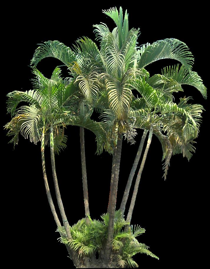 Tropical Plant Pictures: Palm (small) | apresentações ...