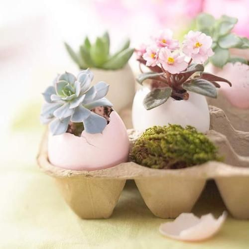 For Easter decor, why not make egg planters? After Easter, the plants  eggshells and all  can be planted in soil.