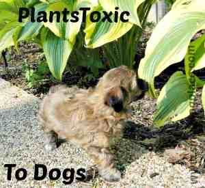 Plants Toxic To Dogs Poisonous Plants To Avoid When Owning A Dog