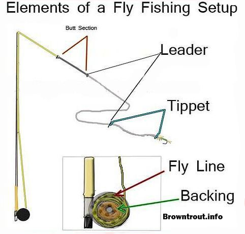 Fly fishing basics, the backing, line, leader and tippet Trout - line leader