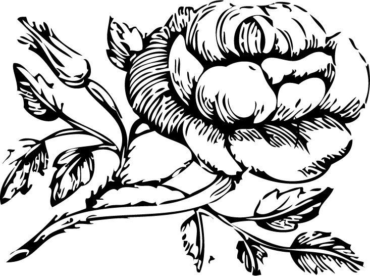 Mormon Share Mia Maid Rose Class Symbol Pinterest Beehive