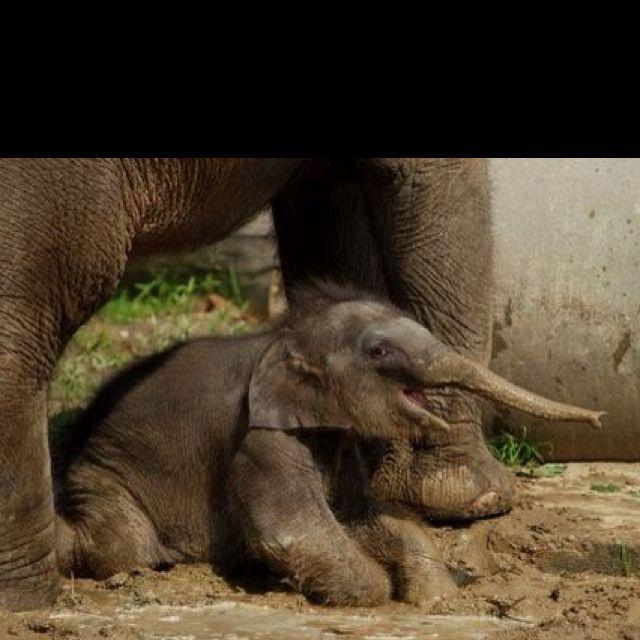 Here I Aaaaaam Elephant Baby Elephant Elephant Love