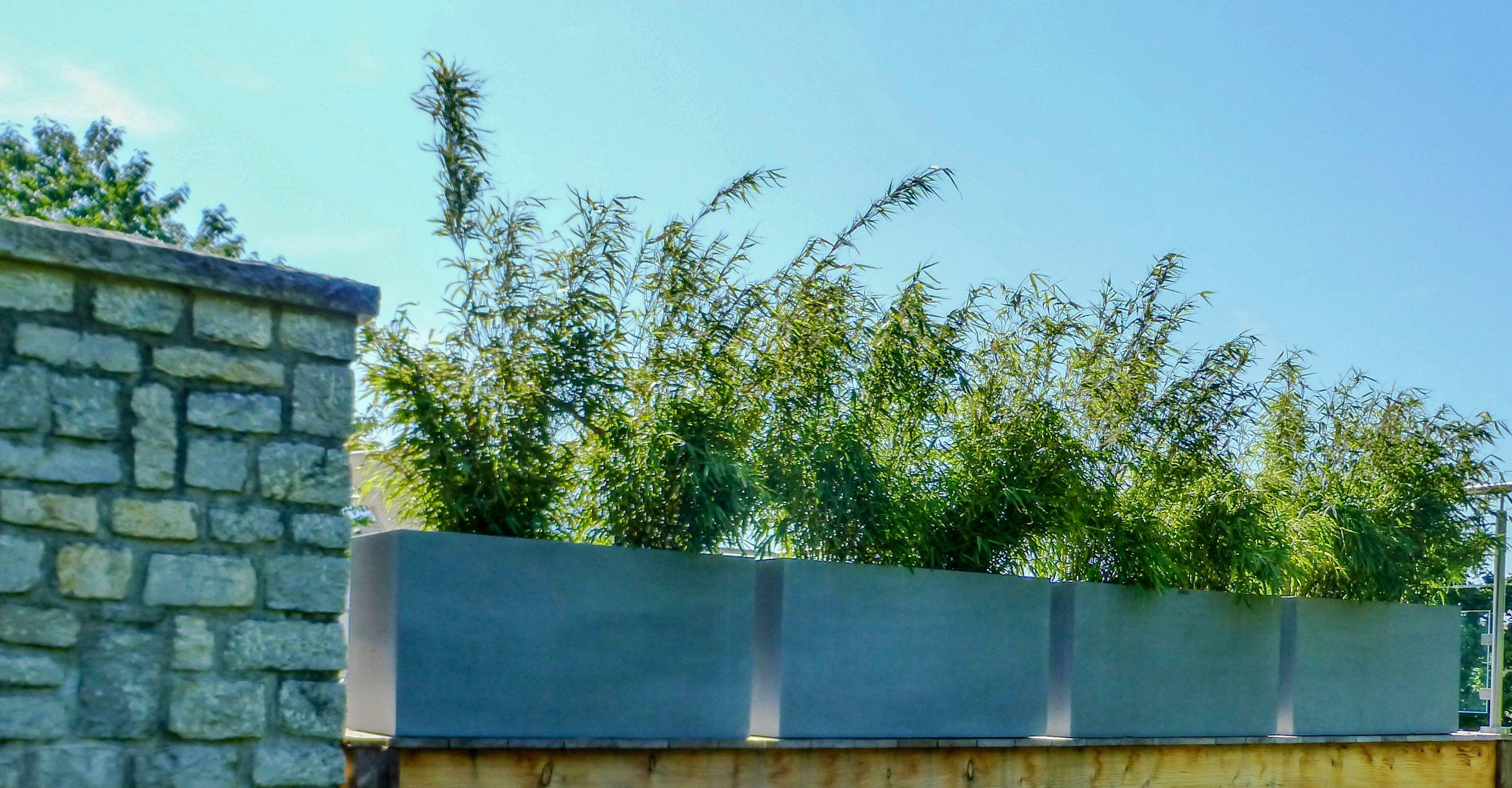 Arbuste Brise Vue Terrasse une rangée d'arbustes en tant que brise-vues   brise vue