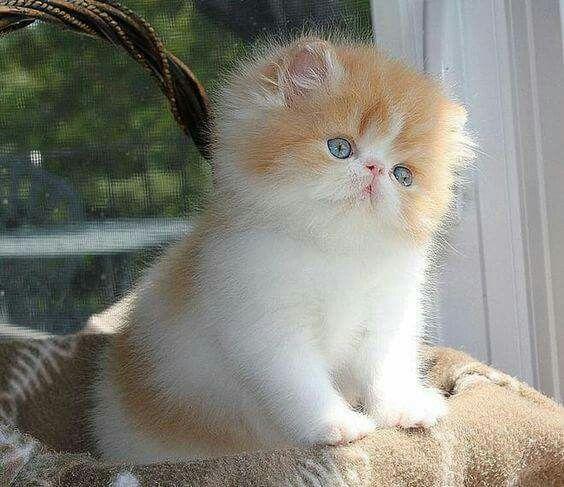 Awwwwwww Cute Cats Kittens Cutest Cats
