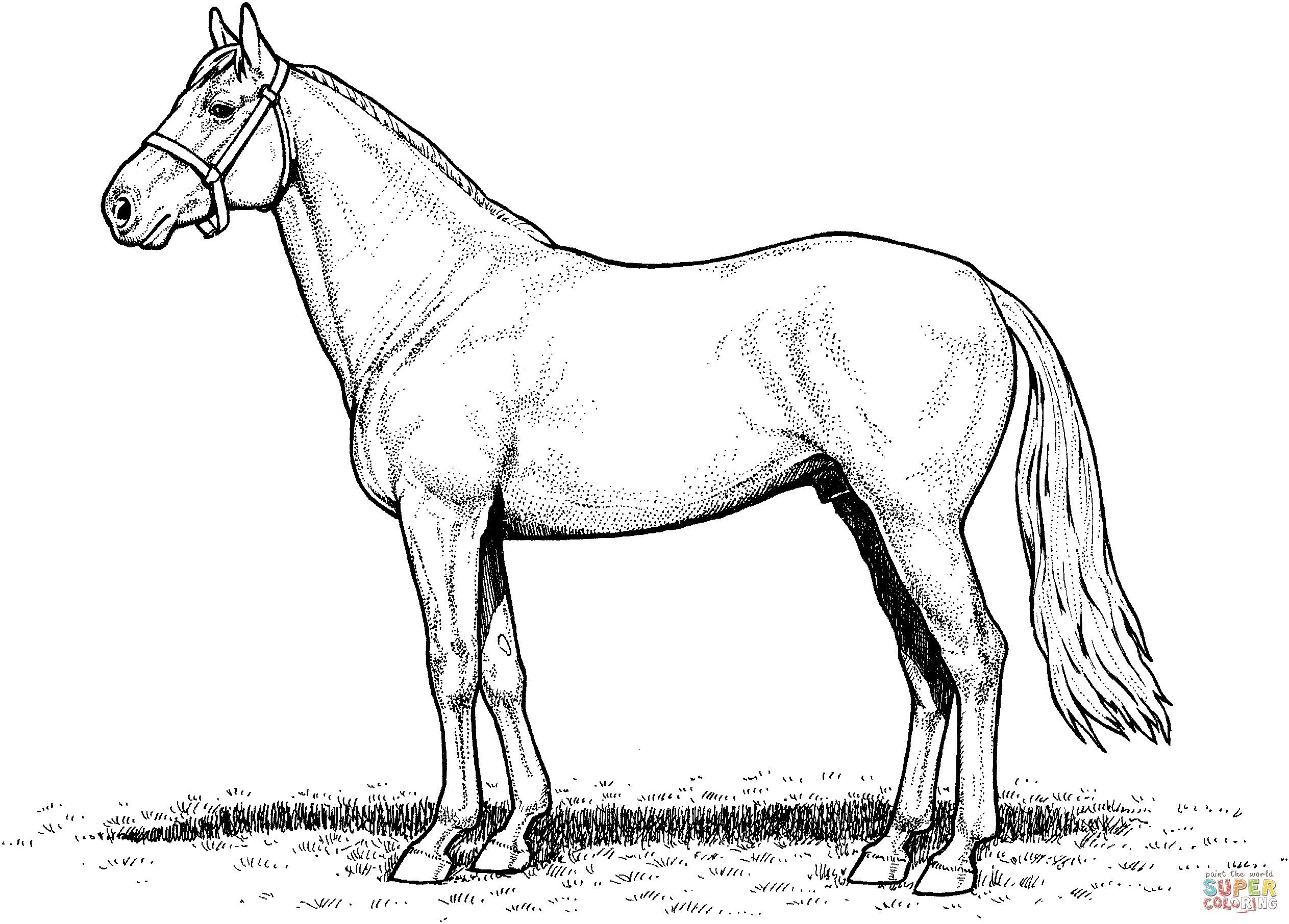 Horses In Barn Coloring Page Google Search Horse Coloring Pages Horse Coloring Horse Coloring Books
