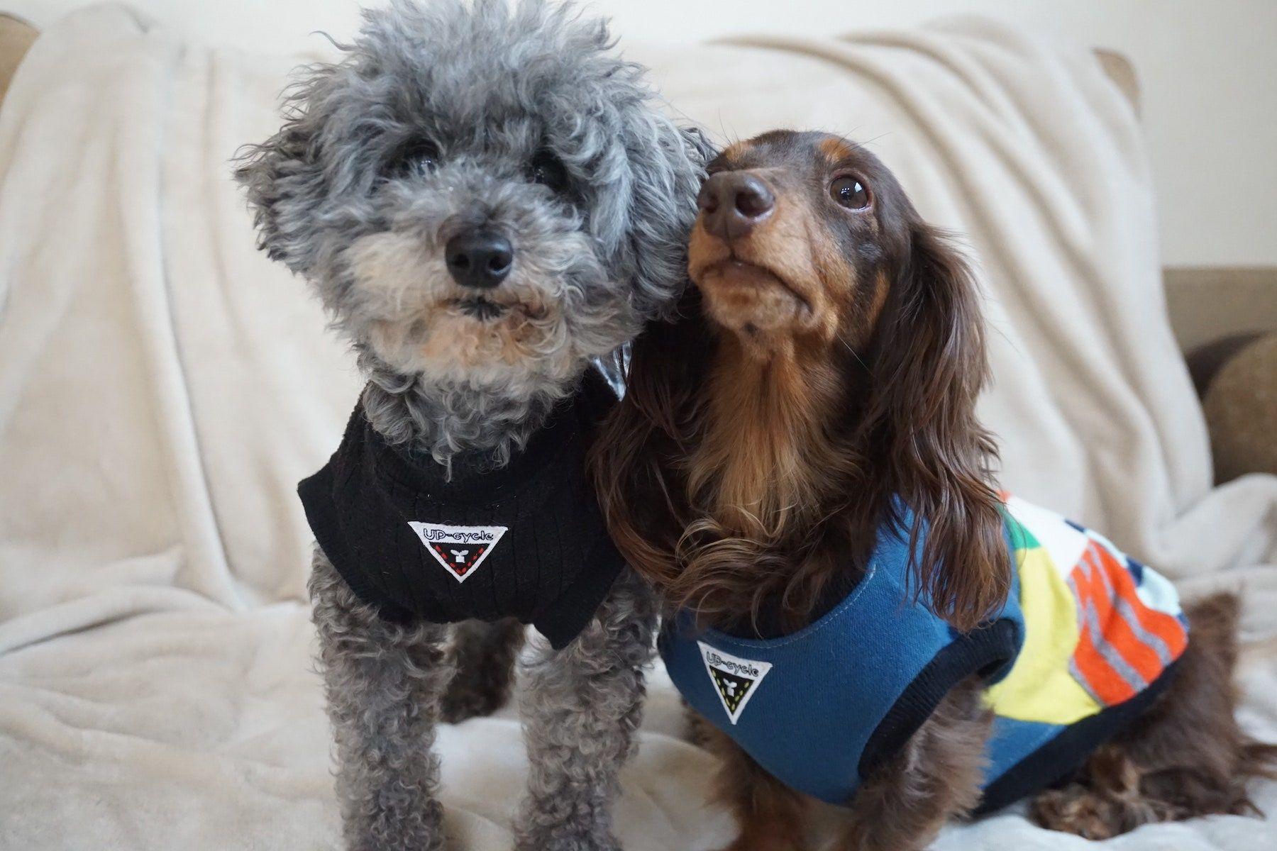 愛犬との生活をサステナブルにアップデート 地球とペットに優しいグッドデザイン 今週のサステナtips ペット 犬 おもちゃ 犬