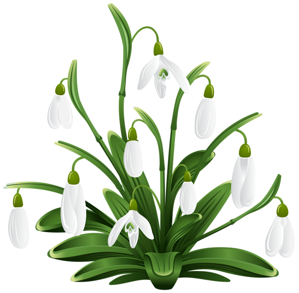 Snowdrops Transparent Png Clip Art Image Pencil Drawings Of Flowers Flower Silhouette Floral Border Design