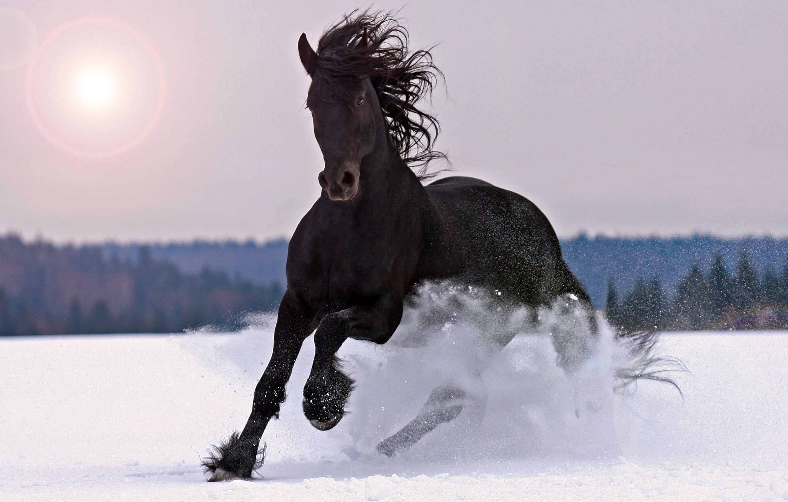 Amazing Wallpaper Horse Snow - 3e661391991cb42fb8959f7ae7ba2410  Collection_59871.jpg