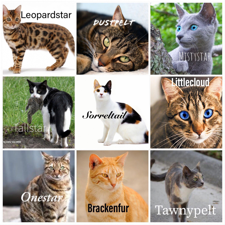 Cats Craigslist Docatsgetcolds Code 2643909195 Warrior Cat Memes Warrior Cats Books Warrior Cat Drawings