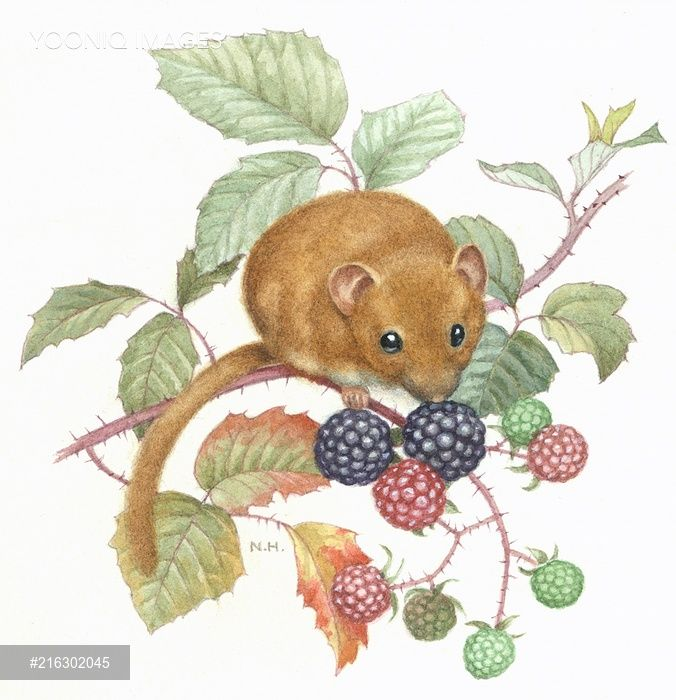 Dormouse And Blackberries Whimsical Illustration Painting