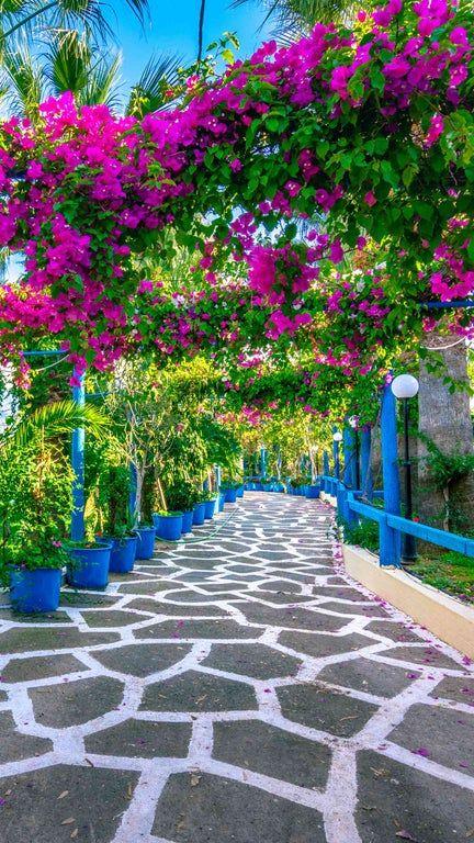 An interesting garden in Greece 1440x2560 [OC]