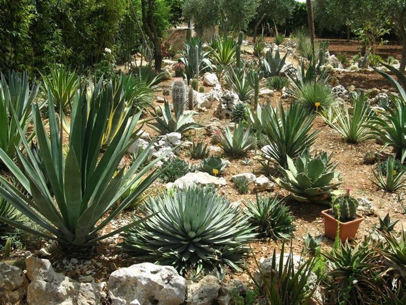 Giardini rocciosi cose da indossare pinterest for Giardino roccioso con piante grasse