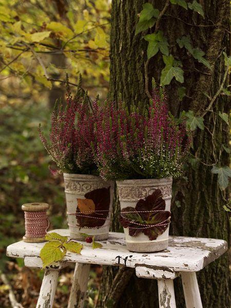 gartentipps so machen sie ihre pflanzen winterfest balkonpflanzen gartentipps und pflanzen. Black Bedroom Furniture Sets. Home Design Ideas