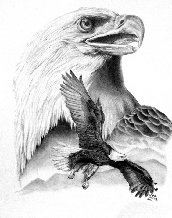 eagle nest drawing | Eagle Drawing Flying App: | タトゥー ...