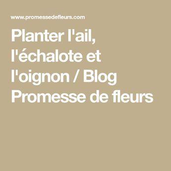 Planter l'ail, l'échalote et l'oignon | Oignon, Échalotes, Oignon en fleur