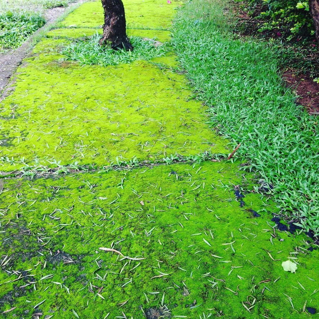 Tons de verde: Verde chuva!!! 😉#natureza #nature #amoverde💚
