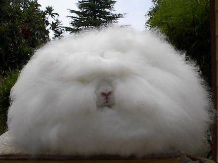 I Guess It S A Rabbit A Very Fluffy One Hassliche Tiere