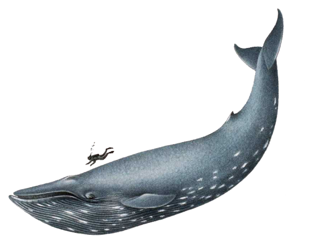 Photoshop Blue Whale Whale Whale Illustration