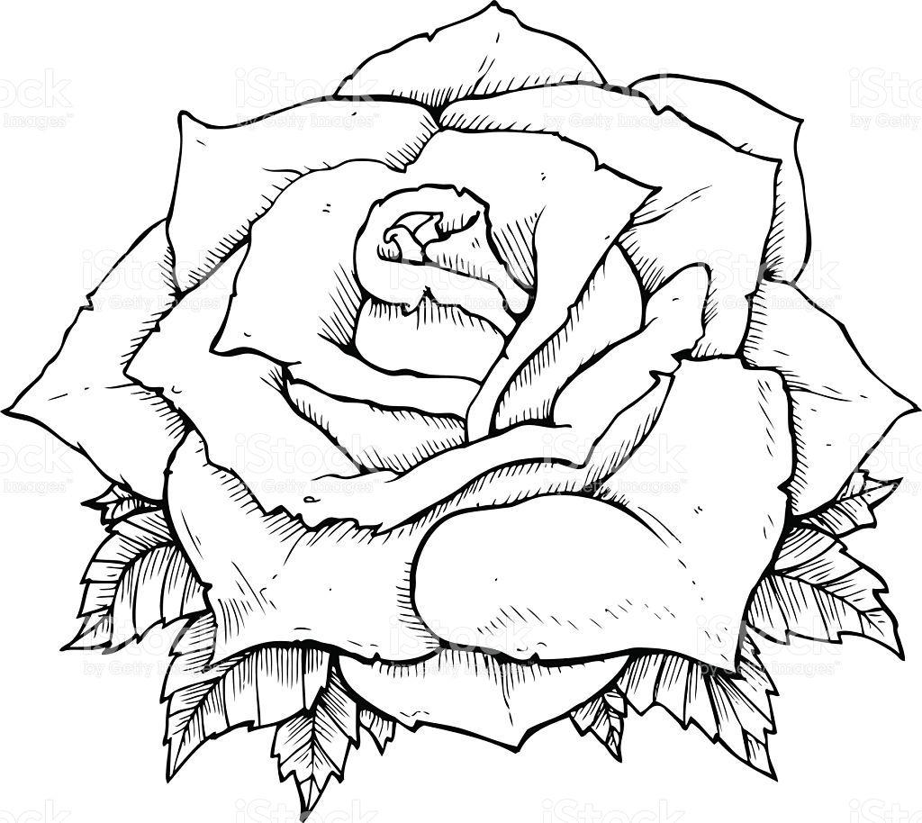 best imagenes de dibujos de rosas image collection