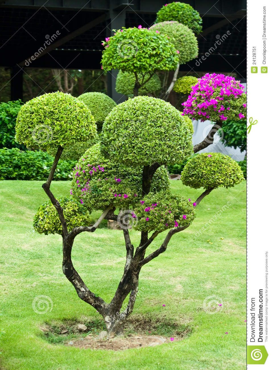 Trees for small gardens nz garden topiary pinterest for Garden law trees