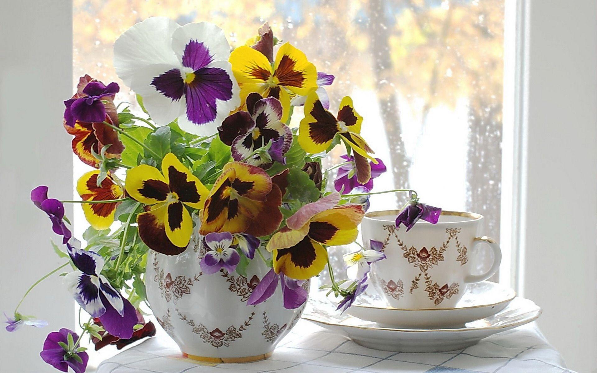 Цветы Анютины глазки (Виола) Обои рабочий стол | Amores ...