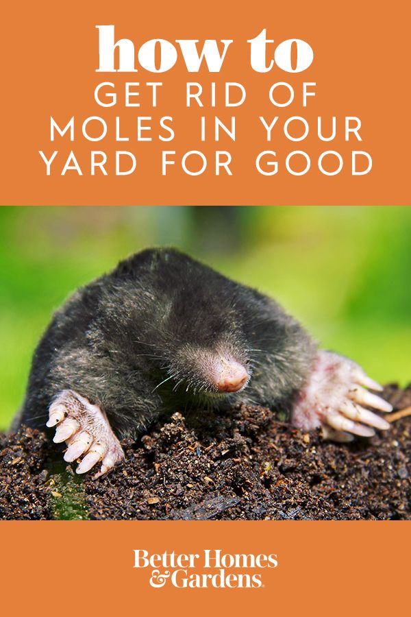 How to Get Rid of the Moles in Your Yard for Good | Garden ...