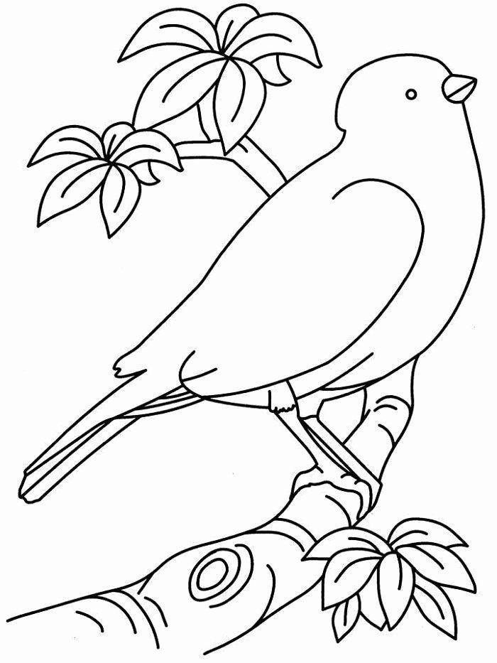 gratis malvorlagen vorlage vogel auf ast  catherine
