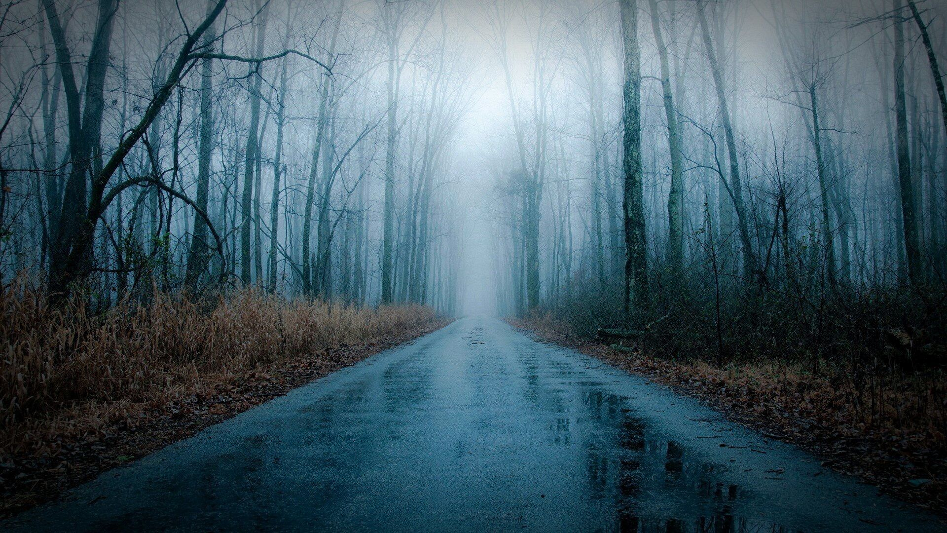 Lvs on Twitter Rain wallpapers, Forest road, Foggy forest