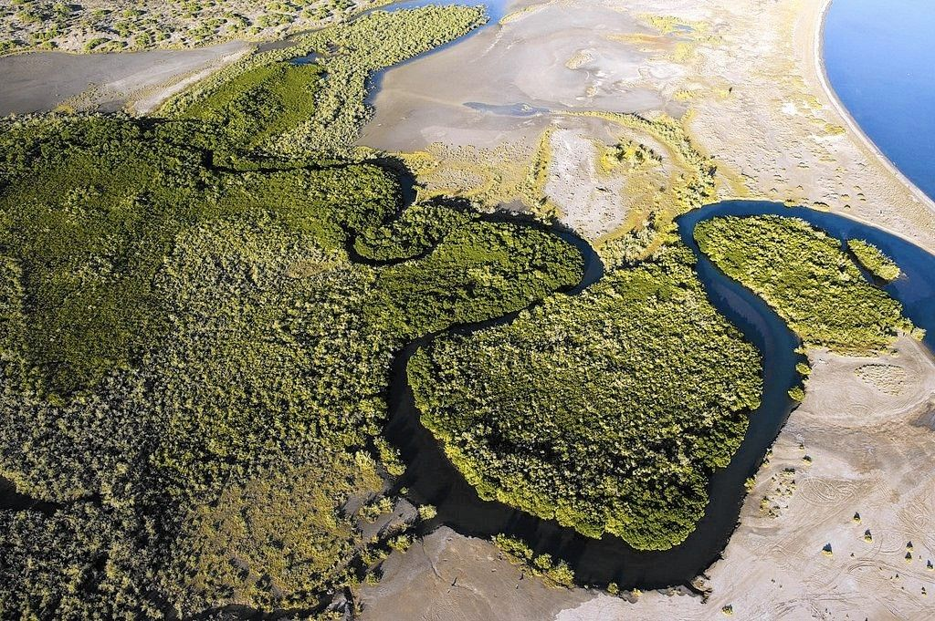 Study reveals hidden value of Baja California mangroves in climate change fight