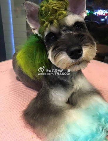Opawz Pet Hair Dye Creative Grooming By Xiaoxia Penteados