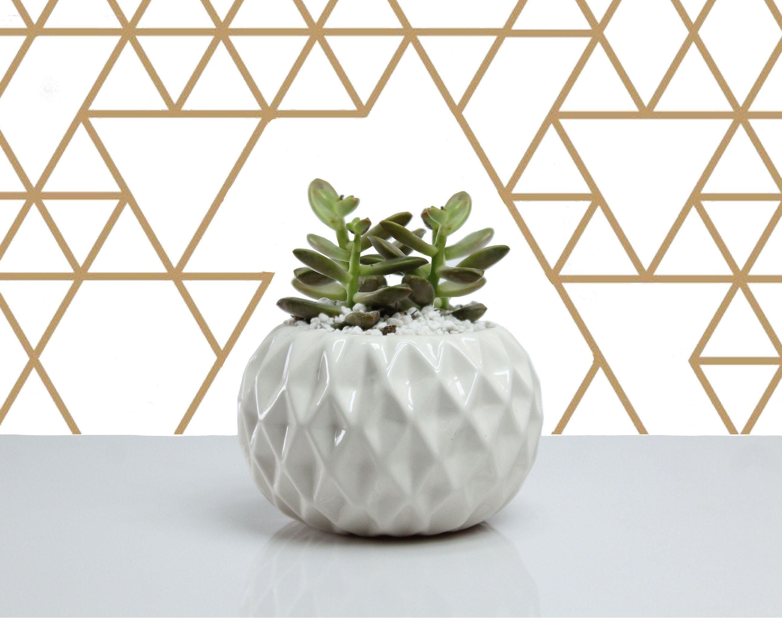 Geometric Diamond Planter, Minimal Planter, Cactus Planter, Geometrical Planter, Cactus
